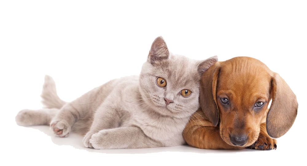 kisspng-cat-dog-pet-sitting-kitten-horse-close-together-dogs-and-cats-5a86c896d15410.8564963115187826148574
